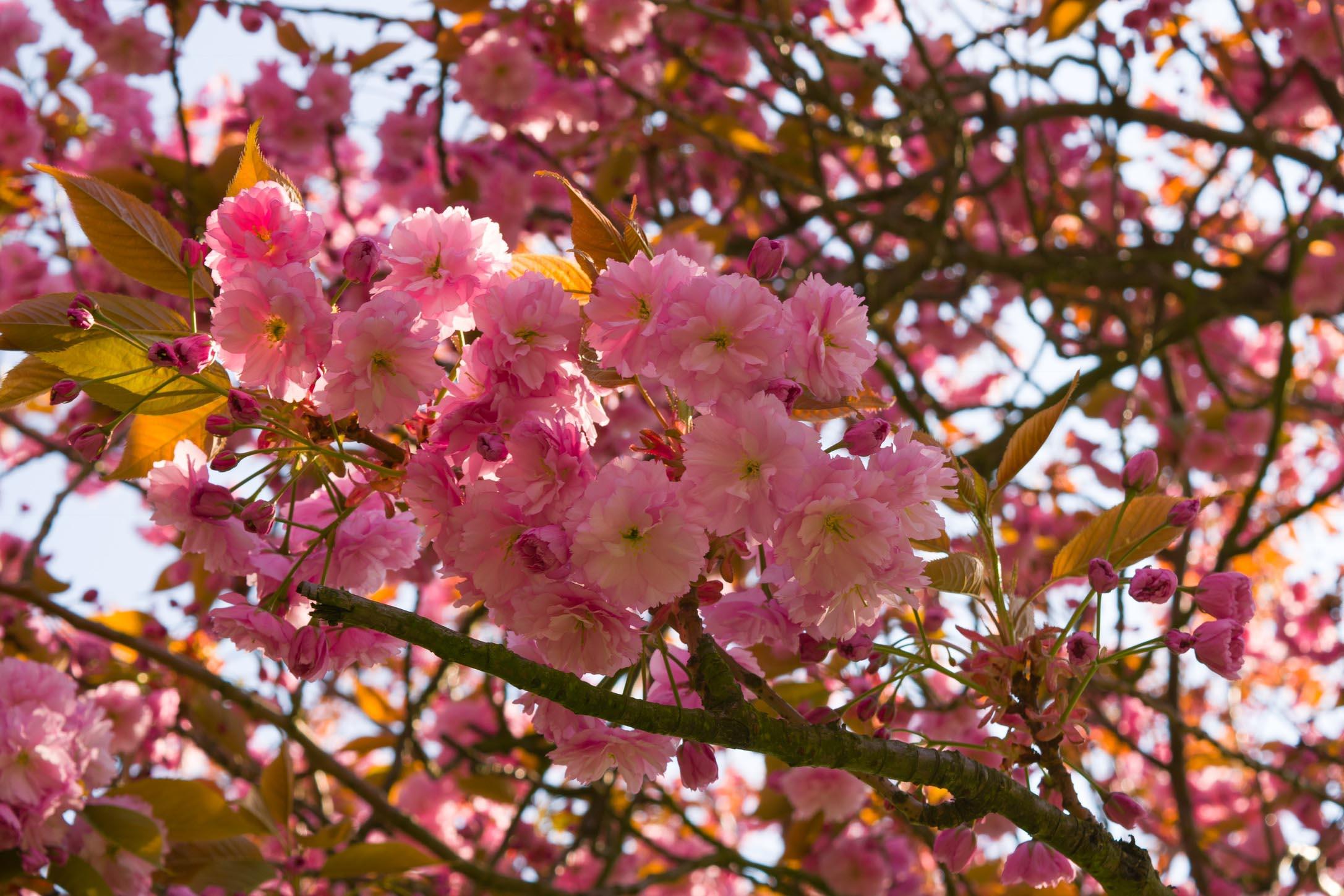 Spring Greenwich Park 2017